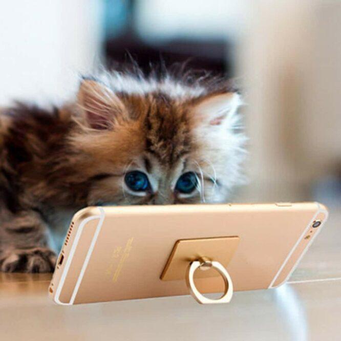 iring kočka
