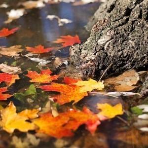 Listopad – Výhercem losování se stala Libuše Šustalová